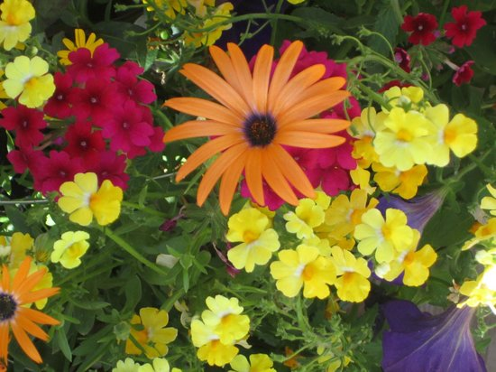 Daven Haven Lodge & Cabins: Our beautiful gardens