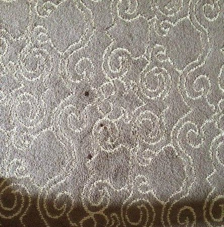 Hyatt Regency Coral Gables: Red stains on carpet