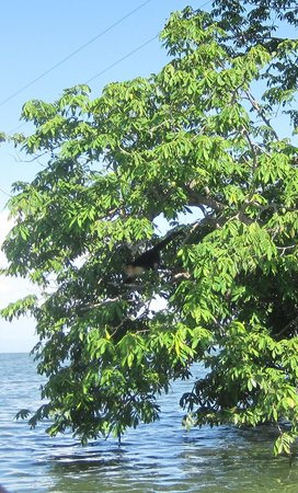 Islets of Granada: We got to see a white-faced monkey!