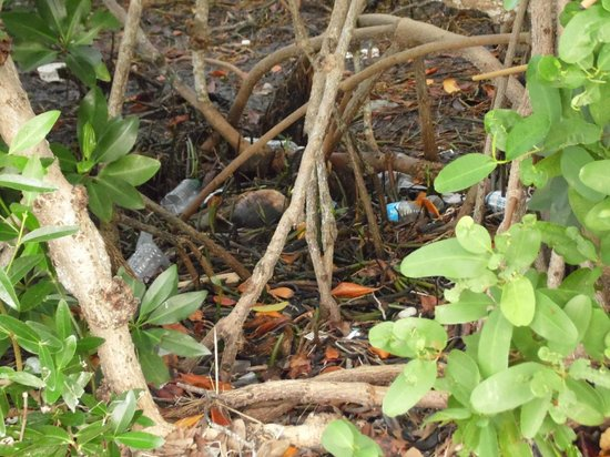 Boyd's Key West Campground : all around the water edge and mangrove there's trash