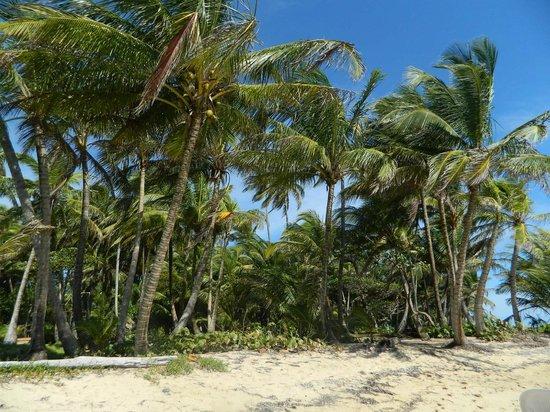 Derek's Place: beach