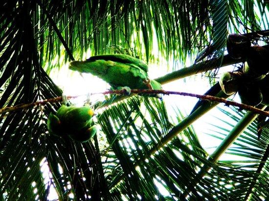 Derek's Place : Annas parrots