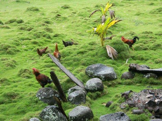 Derek's Place: free range chickens
