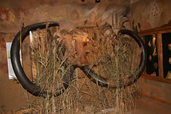 Celtic and Prehistoric Museum: woolly mammoth tusks