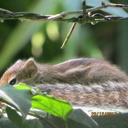 Birdhouse: cute squirrels in the garden