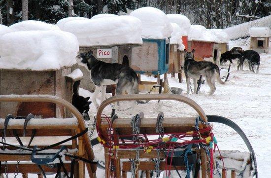Auberge Du Lac Taureau: Les chiens