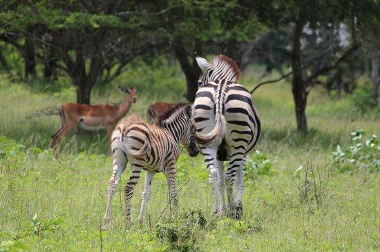 Emdoneni Lodge: Wildlife at Emdoneni