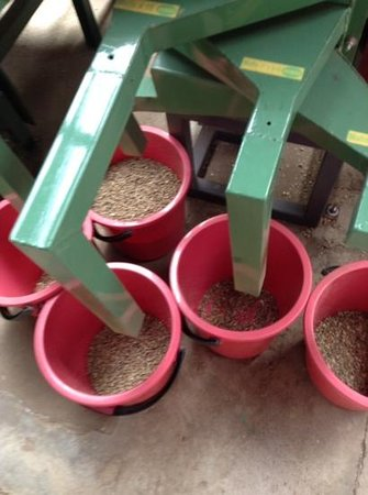 El Trapiche Tour: sorting coffee beans before roasting
