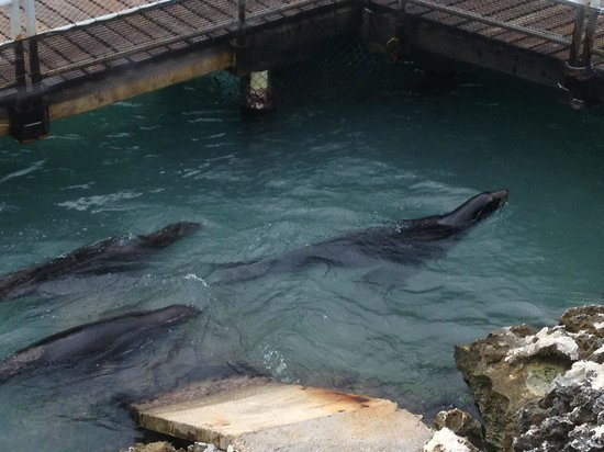 Dolphin Discovery Isla Mujeres: increibles animales