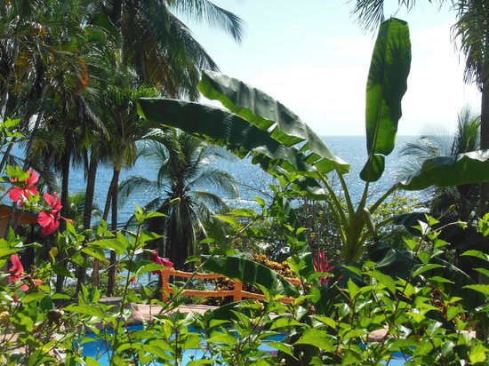 Montezuma Yoga: Beautiful view from the Yoga Pavilion