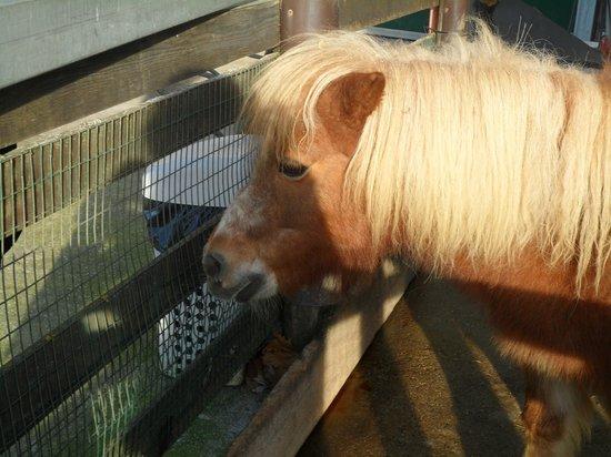 Agriturismo Cascina Graziosa : Pony