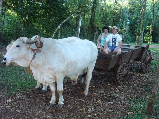 La Mision Mocona | Lodge de Selva: Paseo en carreta