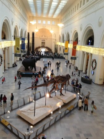 The Field Museum : Main hall