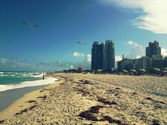 Sense Beach House: La plage face à Ocean drive