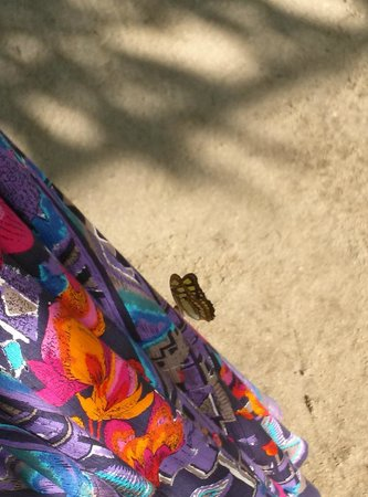 The Butterfly Farm (La Ferme des Papillons): Colorful clothing attracted this butterfly landing.