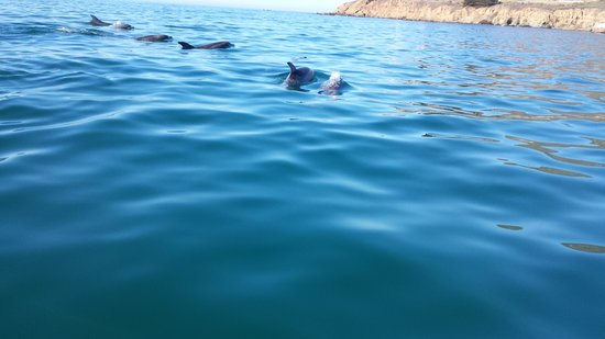 Seaweed Express: A group of dolphins (pod)