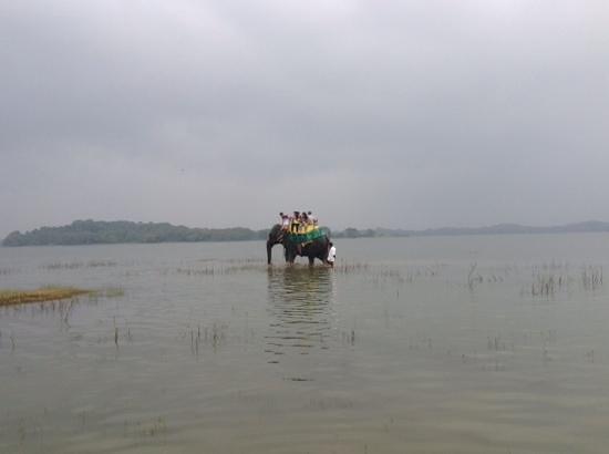 Heritance Kandalama: elephant trekking