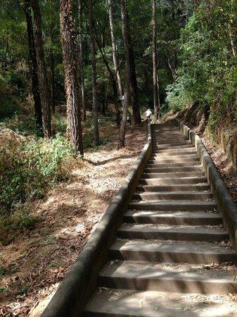 Cerro de la Cruz: The trail