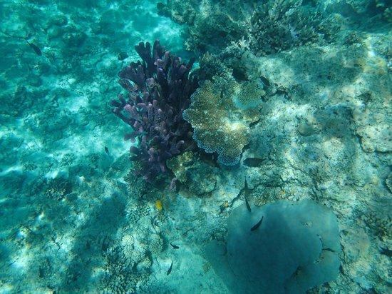 Nukubati Private Island : Great Sea Reef