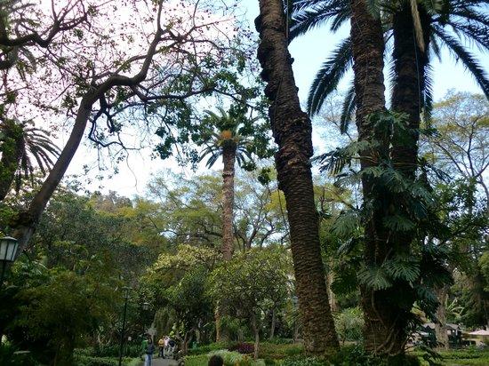 Jardim de Sao Francisco : sao francisco