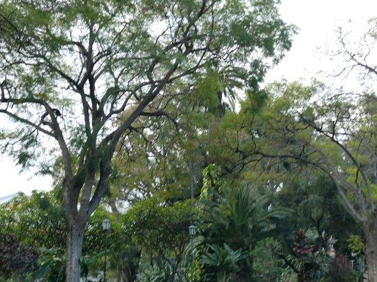 Jardim de Sao Francisco : jardim