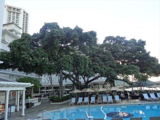 Moana Surfrider, A Westin Resort & Spa : バニヤンツリーが立派でした