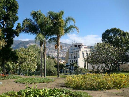 Santa Catarina Park : argentinian-brazilian queen palms,view Avenida Arriaga