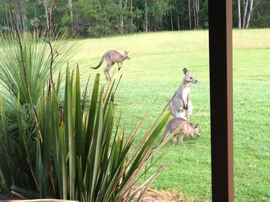 Cedars Mount View : breakky with the roos