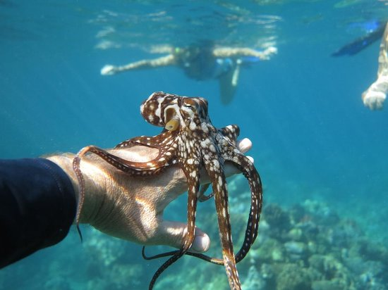 Maui Kayaks: Cool Octopus