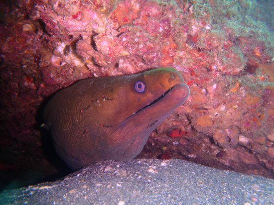 Dive Cabo: One of the local Moray Eels we saw.