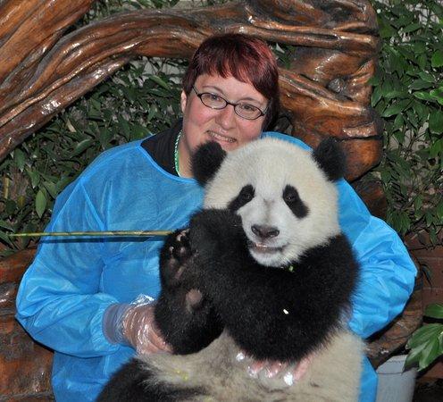 Giant Panda Breeding Research Base (Xiongmao Jidi): Hugs for Schwan Qing