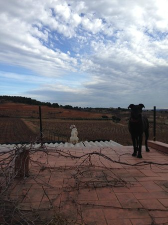 Hotel Castell de Gimenelles: vistas desde el hotel