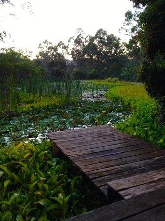Barney Creek Cottages : Deck View