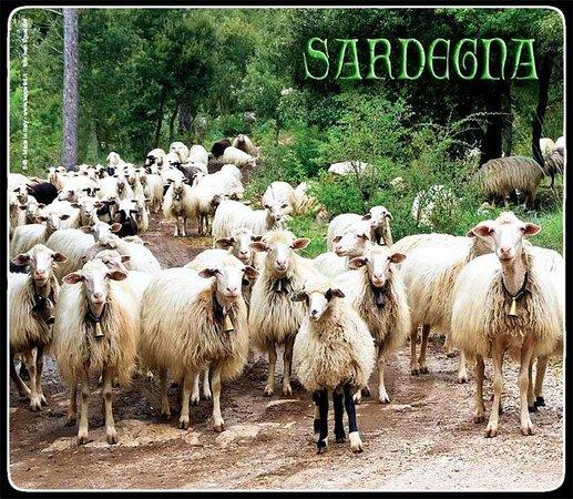S'Arregordu - Candele Artigianali e Souvenirs della Sardegna