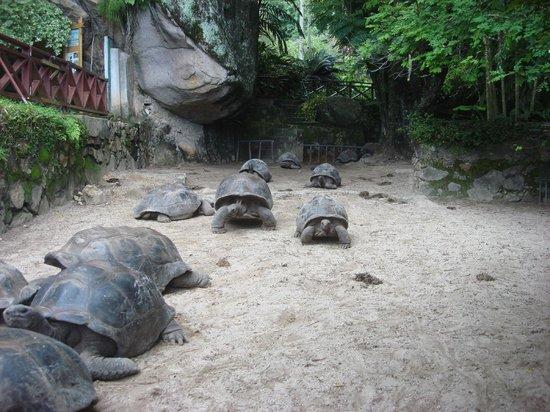 Seychelles National Botanical Gardens: 6