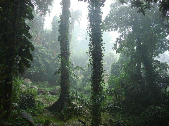 Seychelles National Botanical Gardens: 4