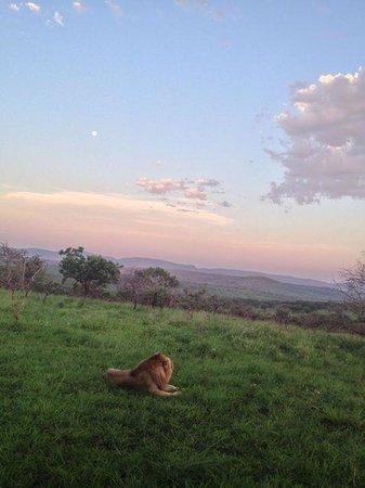Zebra Hills Safari Lodge: Sunset in the bush