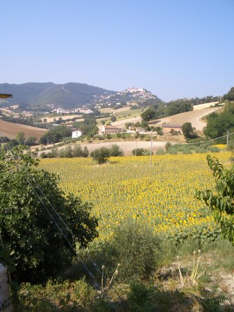 Agriturismo Il Boschetto: The view of Arcevia