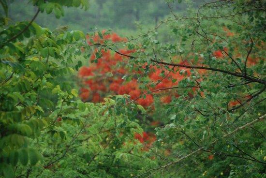 Perry's Bridge Hollow: colori della natura