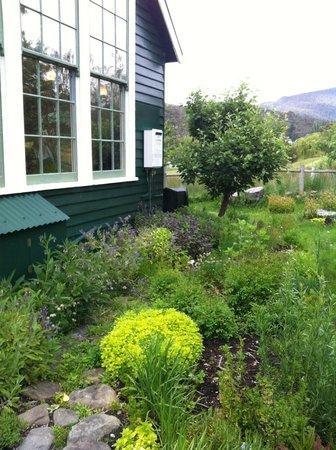 The Agrarian Kitchen: Herb garden outside the teaching kitchen