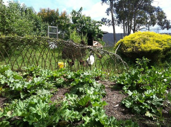 The Agrarian Kitchen: Rhubarb beds and fruit trees