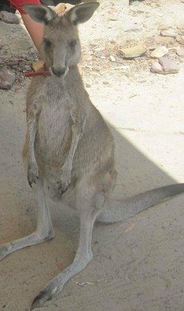 Australia Walkabout Wildlife Park: Layla