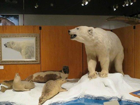University of Alaska Museum of the North : 動物たちの剥製が出迎えてくれます