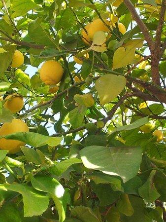 Club Med Marrakech La Palmeraie: Quel bonheur de manger autour des citronniers pour les fêtes de fin d'année c'est paradisiaque