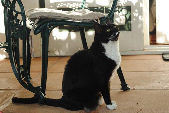 Sunny Lane : Popcorn, the darling cat, on the veranda