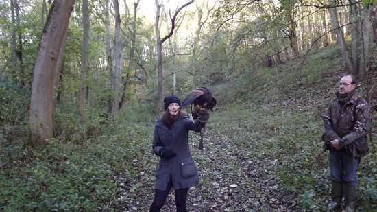South Cave, UK: Hawk Walk with Casper
