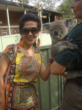 Kangarrific Tours : cute koala...