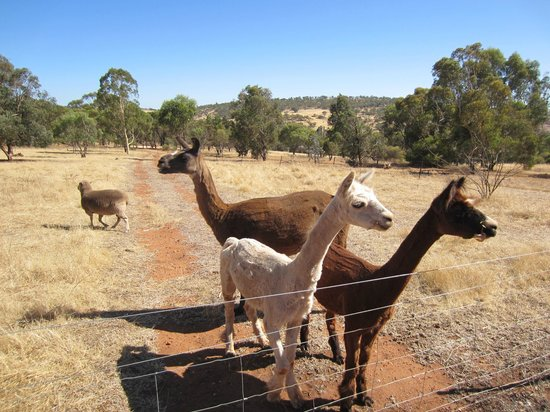 Toodyay Bed and Breakfasts