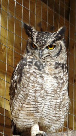 The Wolds Way Owl Trust
