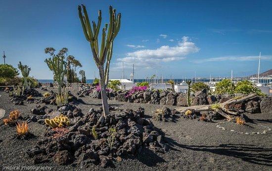 Hotel THe Volcan Lanzarote: Hotel Gardens